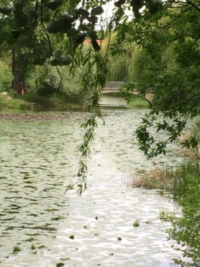 Ein See, mit einer Brücke im Hintergrund, und eine Trauerweide im Vordergrund in das Bild hinein.